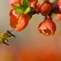 Tour of Honey Bee Research Facilities at UMD- 9/17/16